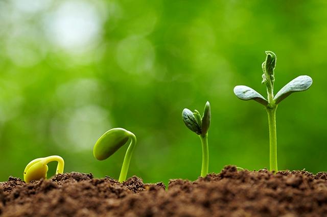 Регулятор росту