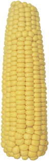 РАМ 1333