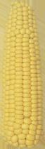 РАМ 3153