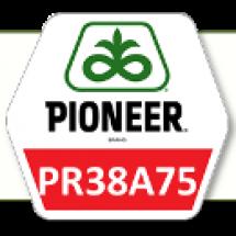 ПР37A75 / PR37A75 ФАО 330