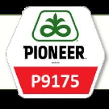 П9175 / P9175 ФАО 330